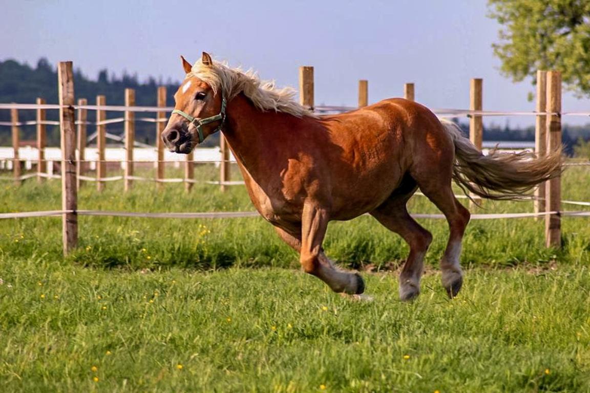 Storczykowe Wzgórze - agroturystyka - konie - dolny śląsk